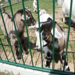 Tiere am Zehenthof 2011